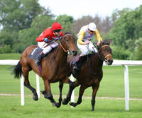 Racing Thoroughbred's